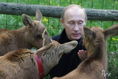 #Putin 097