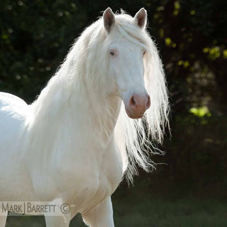 Beatiful Houses Cool 123 Best Rare Horse Breeds Images On Pinterest  Beautiful Horses Design Decoration