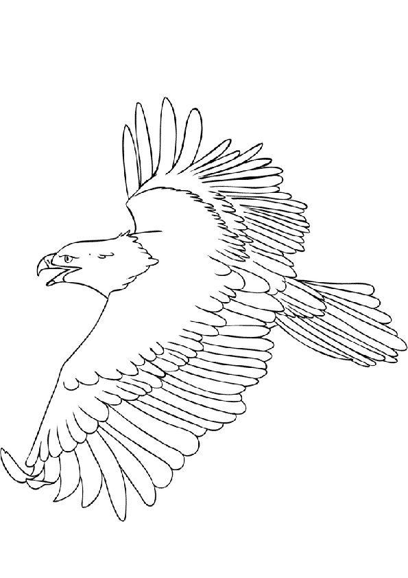 Ausmalbilder Adler Und Schlange Adler Malvorlagen