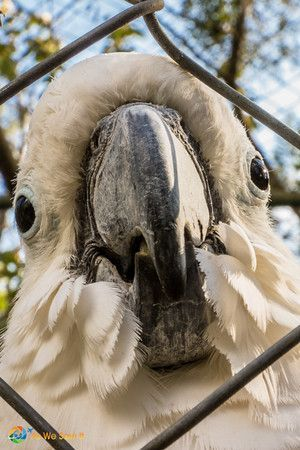 Visit El Nispero Zoo, one of the things to do in El Valle de Anton, Panama: