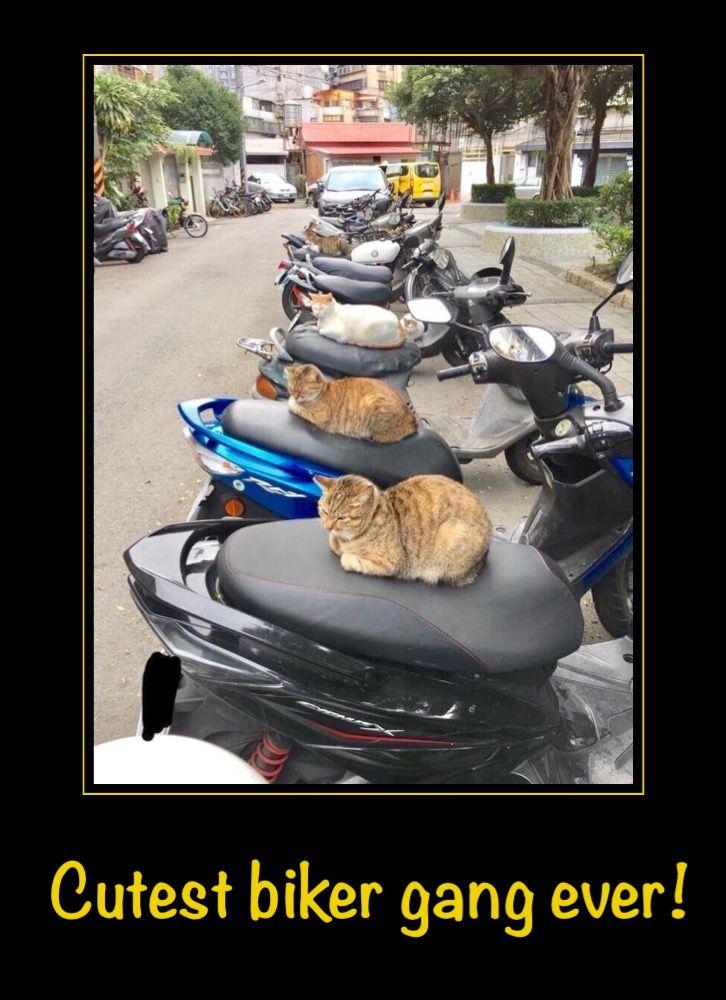 Cutest biker gang ever.