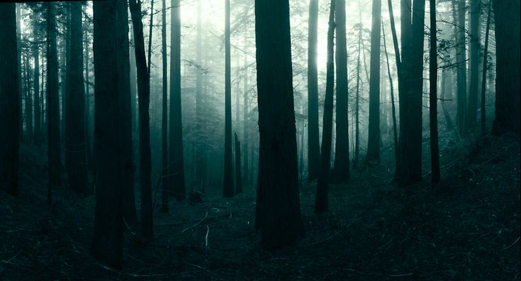 Eloquent Pixels | Landscape Gallery - I: Beautiful Natural Photography, Foggy Forests, Dark Forests, Trees, Desktop Backgrounds, Landscape Photography, Nature Photography, Simon Christening, Woods