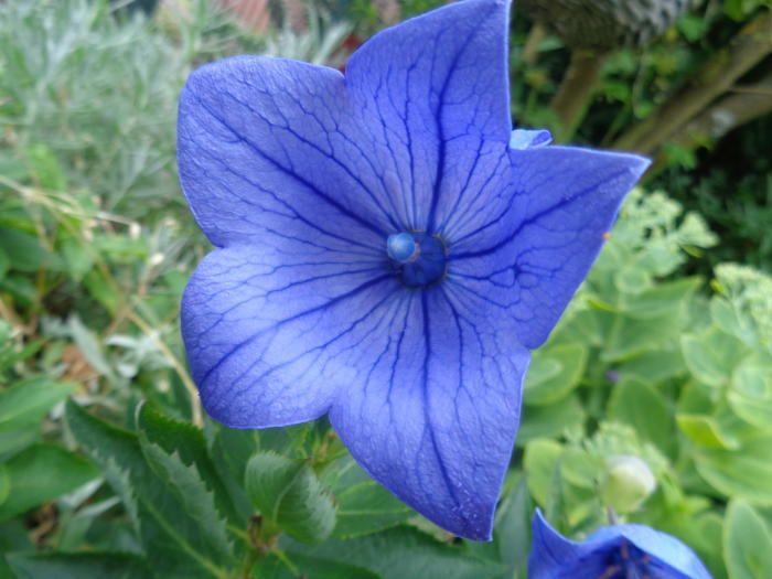 Foto uit de tuin van Louisa S