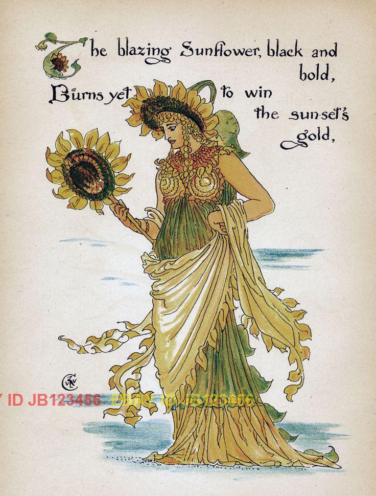 Fairy Sunflower Flower 1890 Antique ART Nouveau Print   eBay