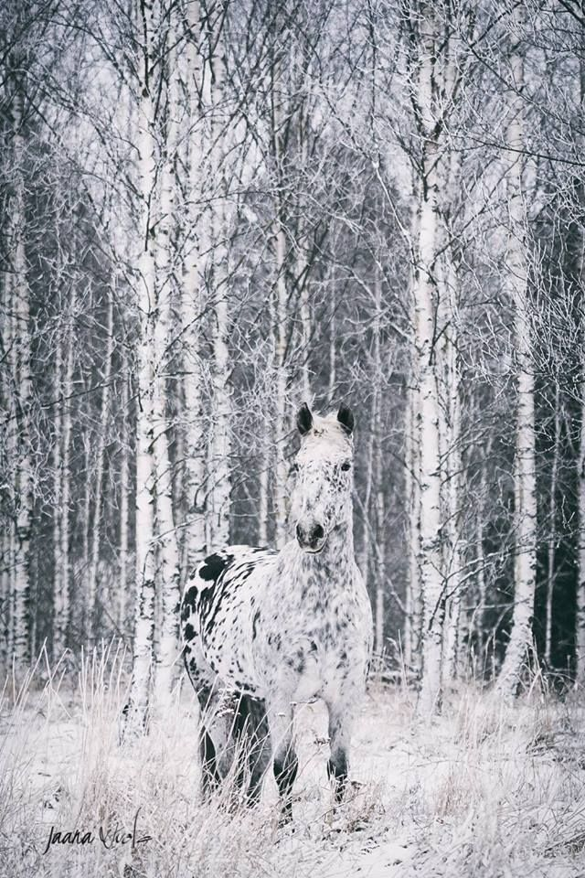 Beautiful horse and trees.