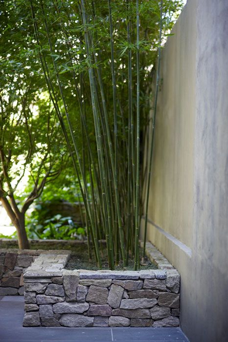 Love The Rock Wall  Courtyard Garden Bamboo