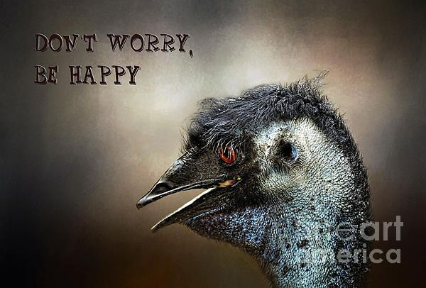 #DON'T #WORRY, #BE #HAPPY by #Kaye #Menner #Photography Quality Prints and Cards at:  http://kaye-menner.artistwebsites.com/featured/dont-worry-be-happy-kaye-menner.html