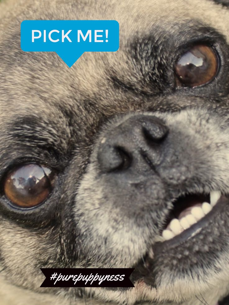 Pick me! 🐾🤗#pure #purepuppyness #dogs #puppylove #puppyhoney #newdoggy #puppies