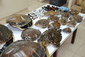 Medio Ambiente advierte sobre comercialización de accesorios concha de tortuga Carey | Danielconelpueblo