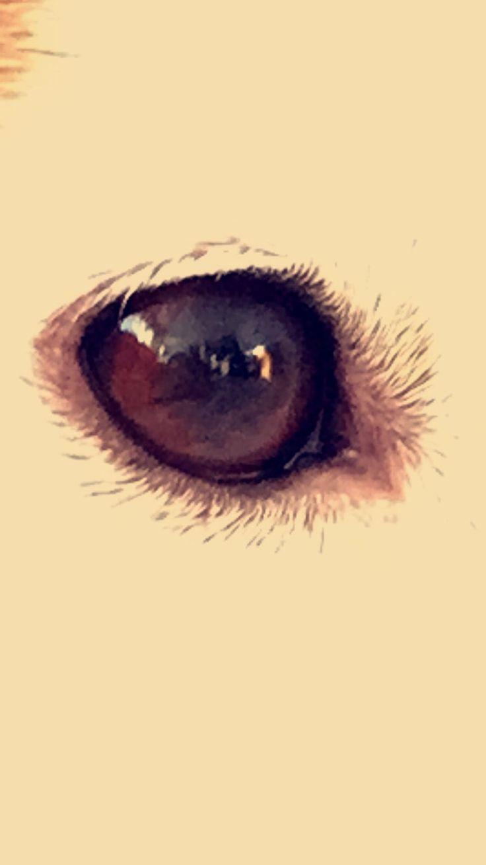 Juno's eye