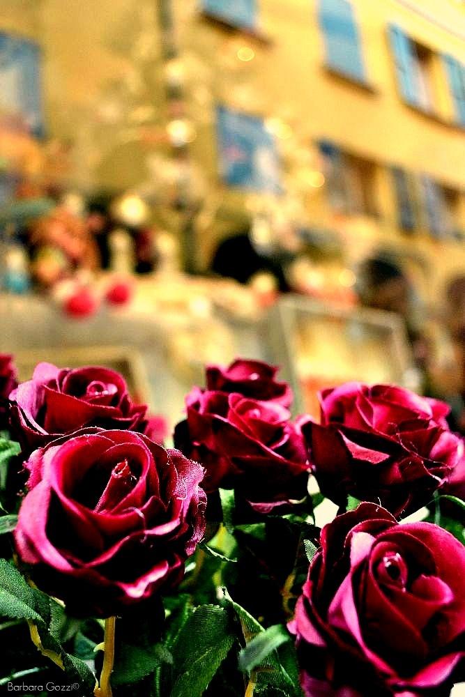Vetrine e rose - Barbara Gozzi©