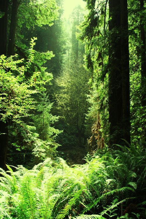 The green sunlight of the forest