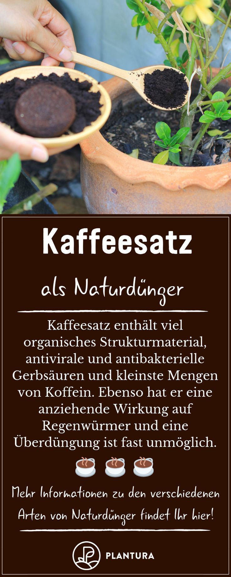 Garten Gardening Duenger Naturduenger Kaffeesatz Als Naturdunger Kaffeesatz Als Naturdung Natural Fertilizer Gardening For Beginners Gardening Tips