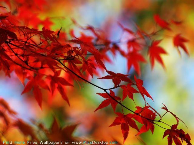 Nature - Autumn Desktop Wallpaper pics. #24