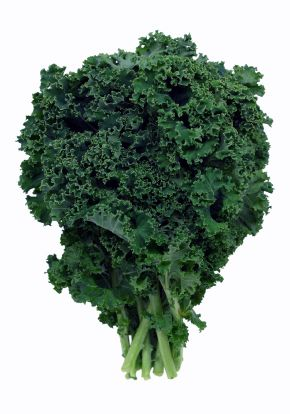 How to Grow Kale: Kale is one of the most nutritious plants you can grow in the garden, and is packed with vitamins. You will get nearly an entire day's worth of vitamin C in a serving, and more than a day's supply of vitamins K and A. Add in manganese, calcium, potassium and fiber and you have yourself a plant worth eating.