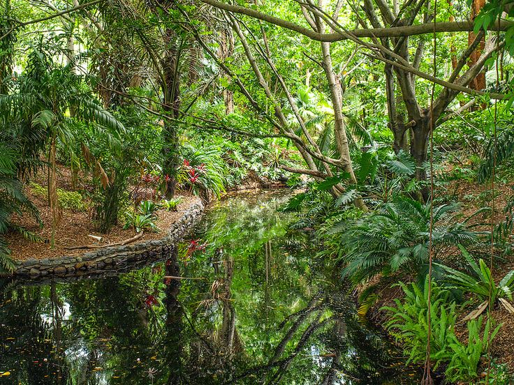 The rainforest area of Brisbane Botanic Gardens is a hidden oasis. Head out and take a look for yourself.
