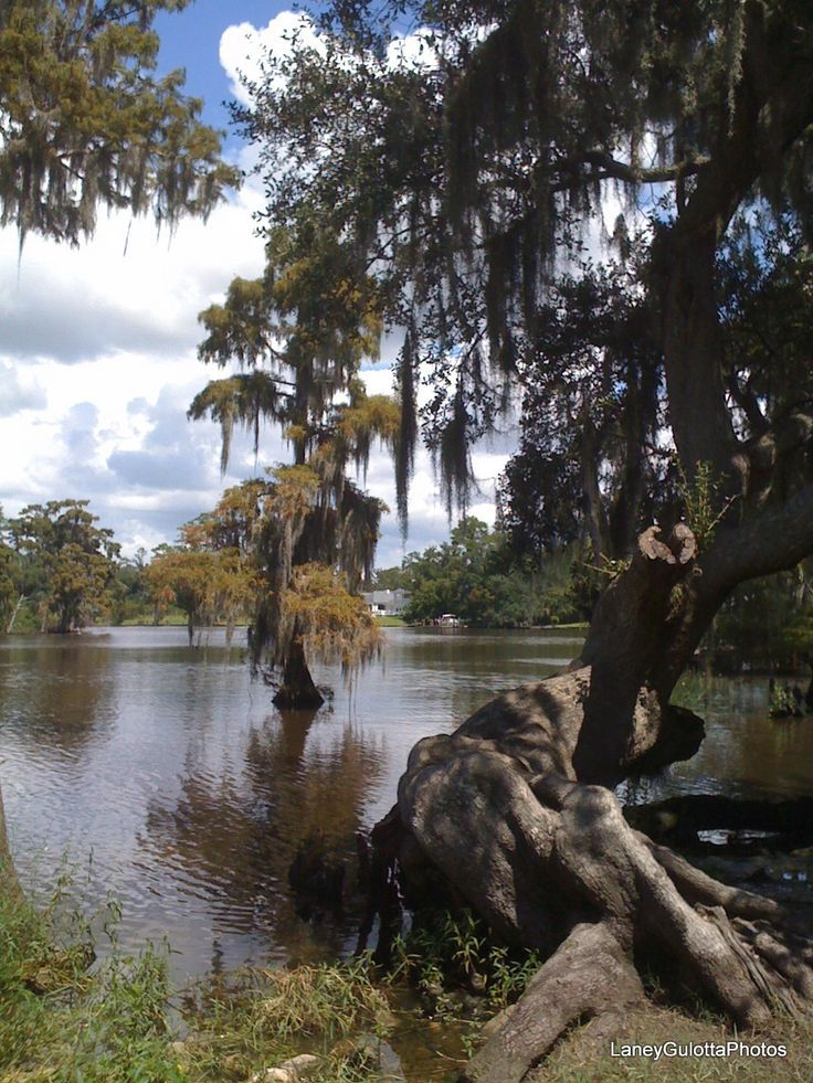 Fairview Riverside State Park, a Louisiana park located near