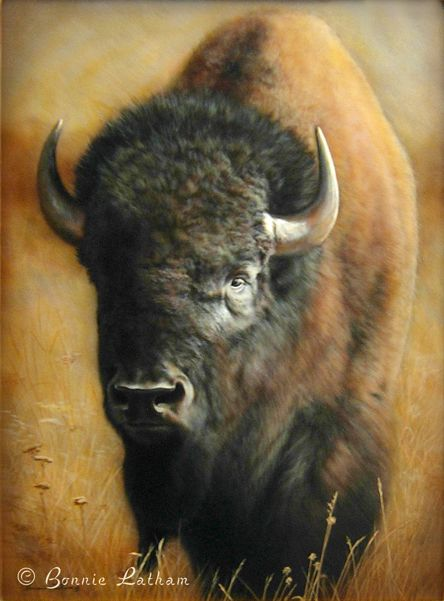 1000 Images About Wildlife And Nature Art By Bonnie