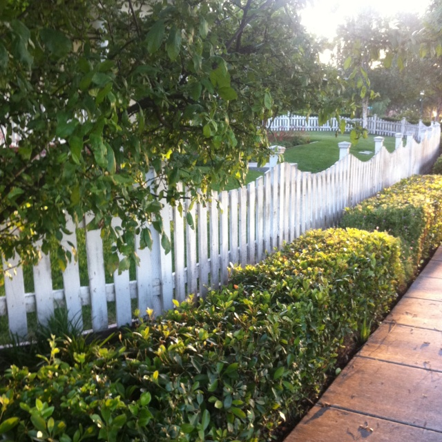 Charmant Picket Fence And Boxwood