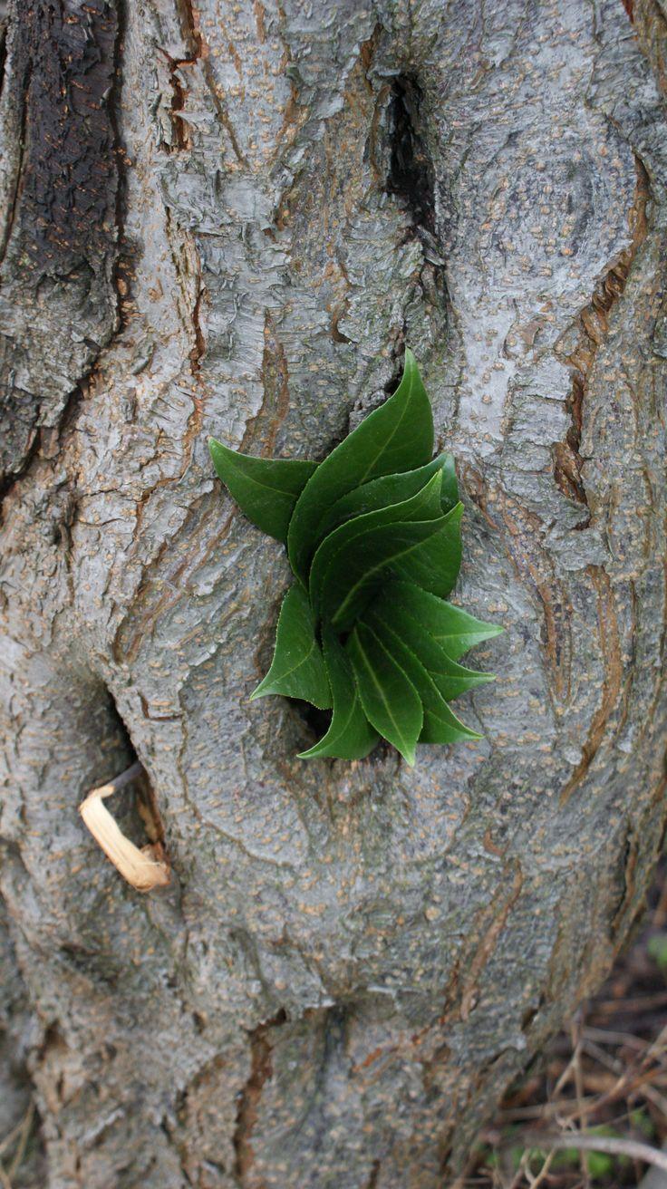 leaf in tree