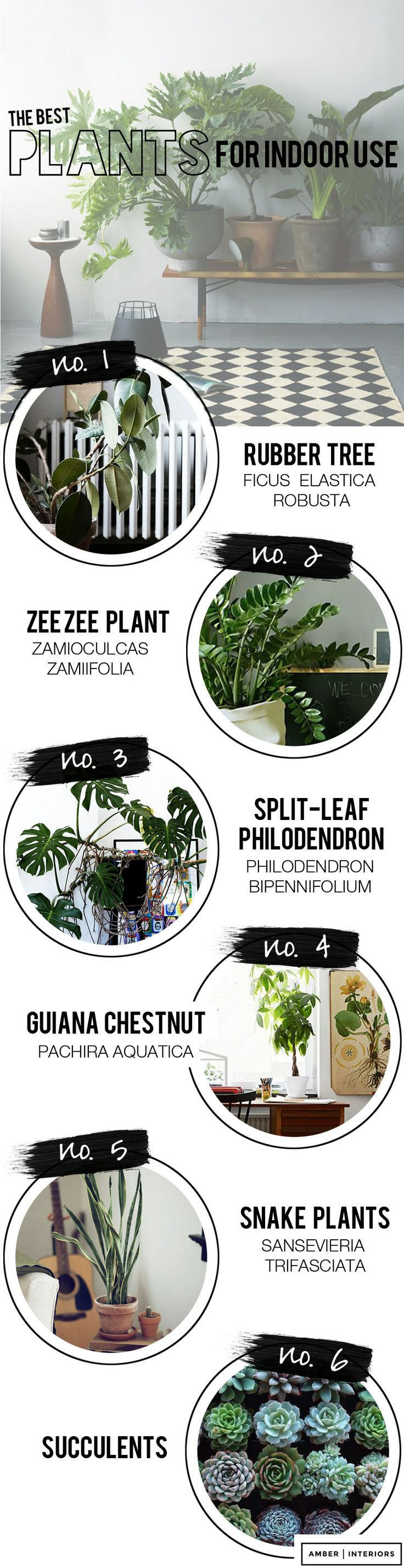 6 best indoor house plants Amber Interiors