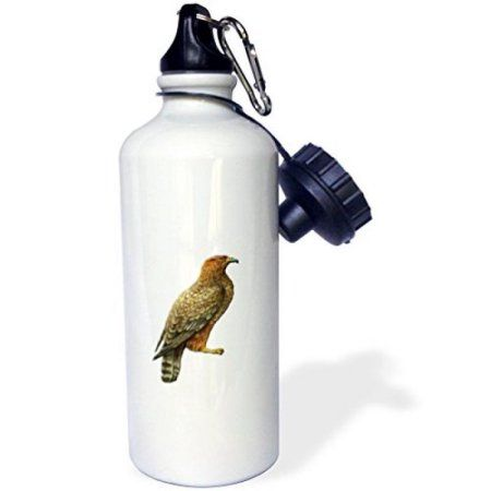 3dRose Victorian Era Bird of Prey Illustration Large Reddish Brown Bird, Sports Water Bottle, 21oz, White
