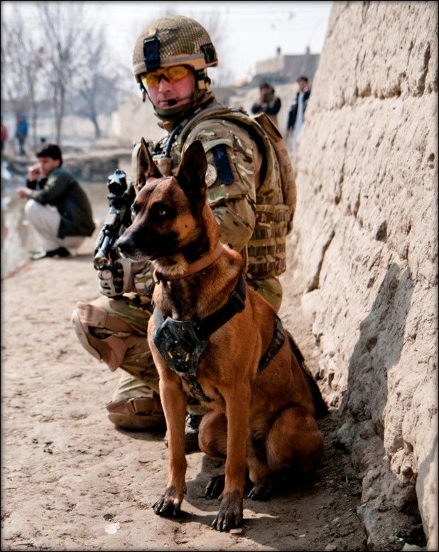 ... military working dog handler holds her partner mwd alex as he gives