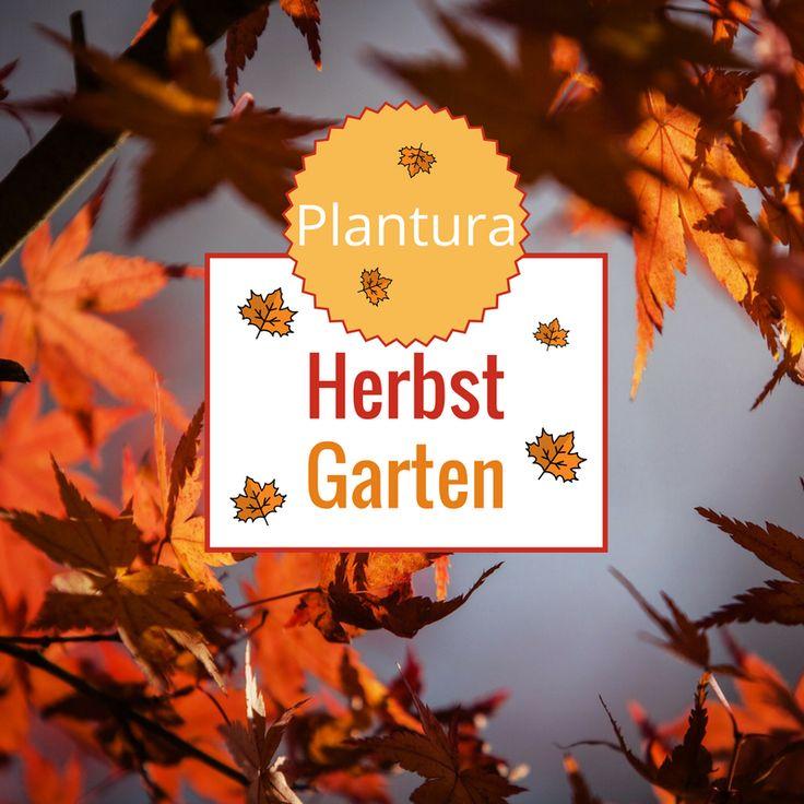 Welche Garten Aufgaben stehen im Herbst an? Neben Rasen säen, düngen und vertikutieren gibt es noch viel weiteres zu tun, um die Pflanzen vor Frost zu schützen und mehr!