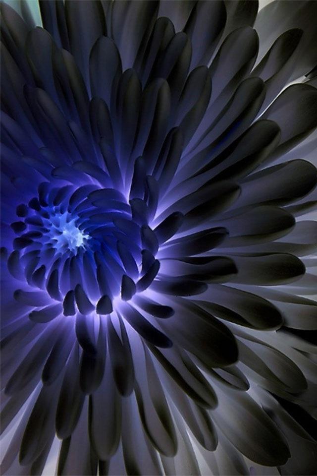 .: Flowers Photography, Blue Flowers, Natural Beautiful, Dark Beautiful, Black Flowers, Colors Splash, Bit Colors, Beautiful Art, Beautiful Things