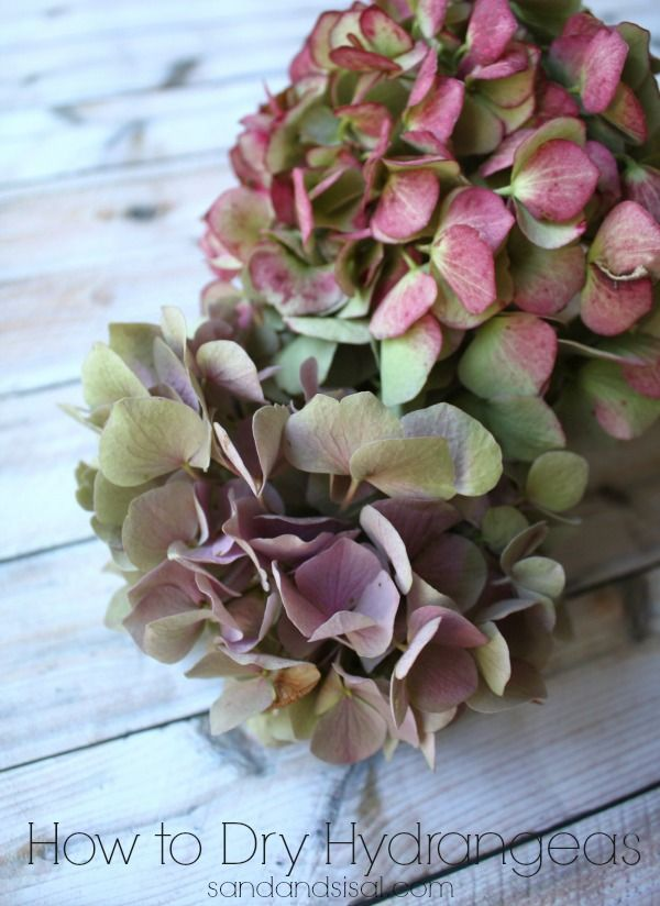How to Dry Hydrangeas - for year round decorating!: