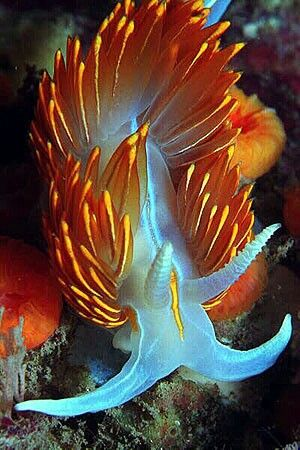 Nudibranch - a flashback to my Invertebrate Zoology class!