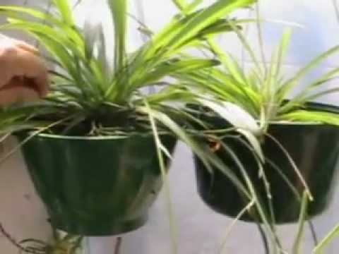 Easy plant for home that will help with air purifying for Best air purifying plants for bedroom