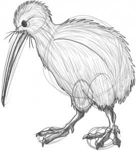 How to Draw a Kiwi, Step by Step, Birds, Animals, FREE Online Drawing Tutorial, Added by Dawn, April 26, 2009, 12:29:59 pm