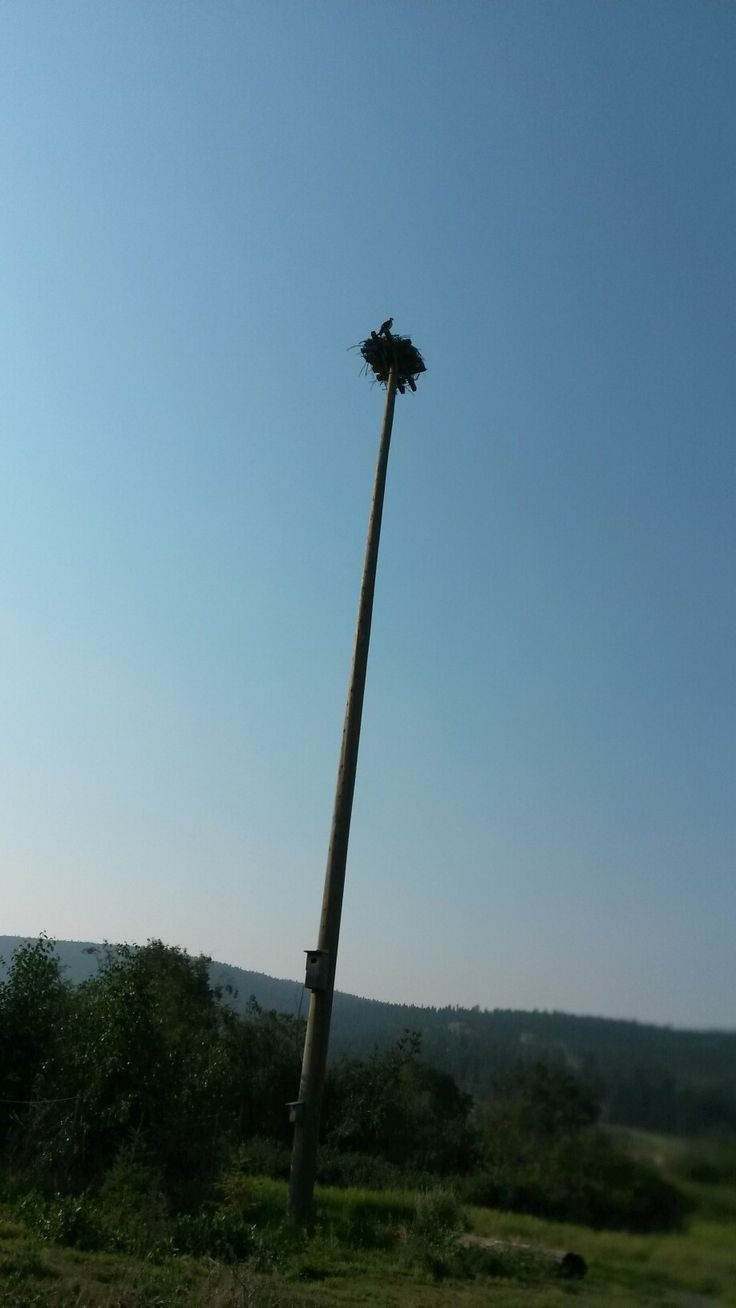 Osprey At ( SCOUTS ISLAND NATURE CENTRE ) :