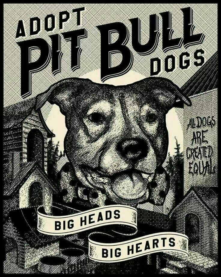 If u never owned a pitbull u don't know how amazing these dogs are and they have a bigger heart then any dog thy r known to attack bc if there owner poor dog ADOPT A PITBULL TRAIN IT WELL