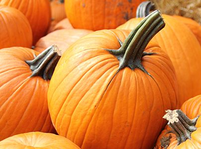 18 Best Fall Images On Pinterest Champaign Illinois Fall Season And Prairie Garden
