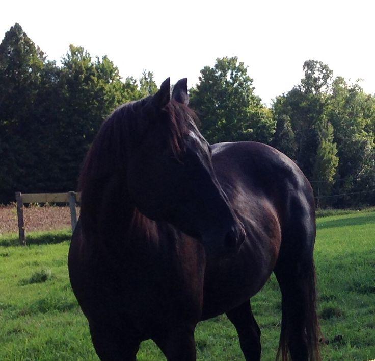 Miss Minnesota Moon my beautiful Quarter Horse