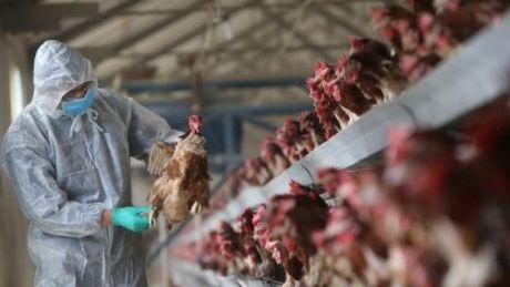 China luptă cu cea mai gravă epidemie de gripă aviară: 87 de morţi şi sute de spitalizaţi