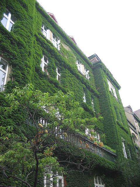 Bratislava - Croatia Garden Building Eaten By Vine Homeland