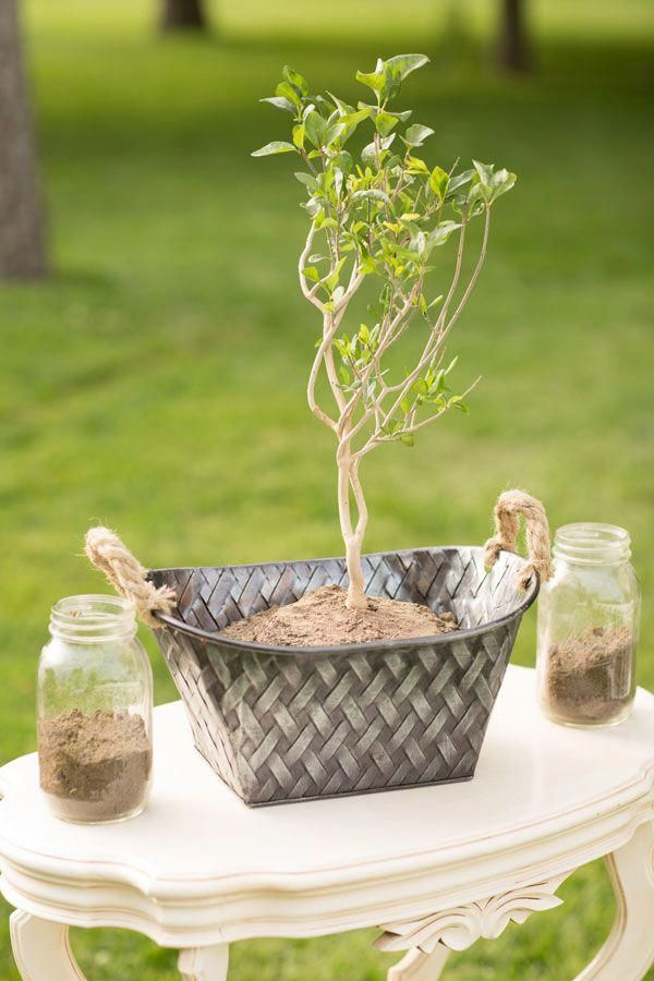 plant for unity ceremony | Wedding Ceremony Ideas in 2019