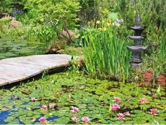 5 tips voor een natuurlijke tuinvijver.