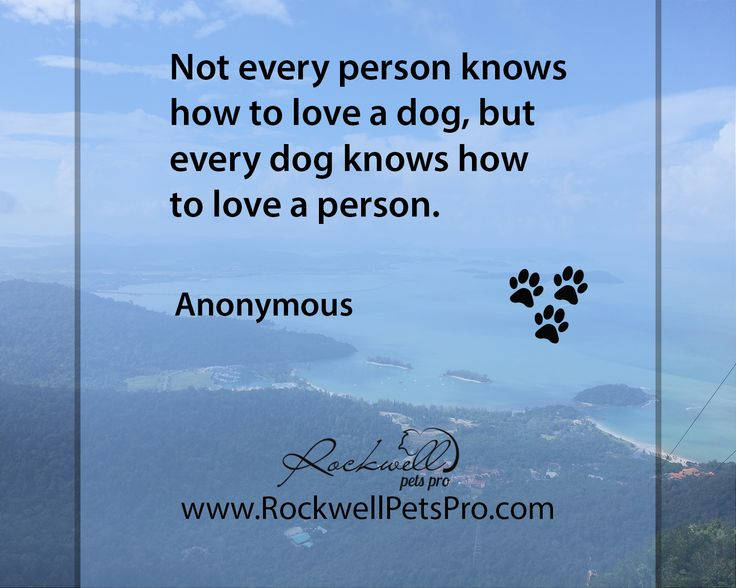 Not every person knows how to love a dog, but every dog knows how to love a person. www.rockwellpetspro.com #Dog