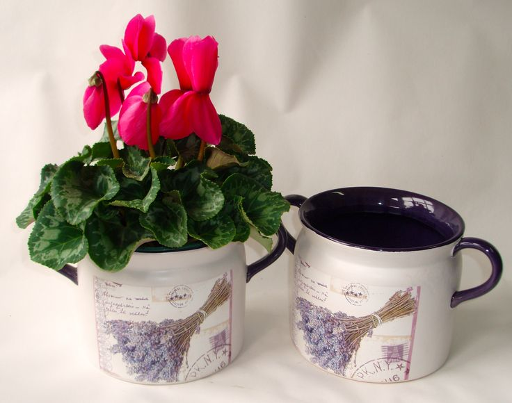 Euro Jug thick heavy ceramic with deep purple interior and delightful lavender design on front comes with beautiful flowering cyclamen plant available here www.summerhillnurseries.com.au