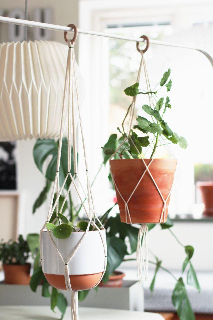 växt i ampel