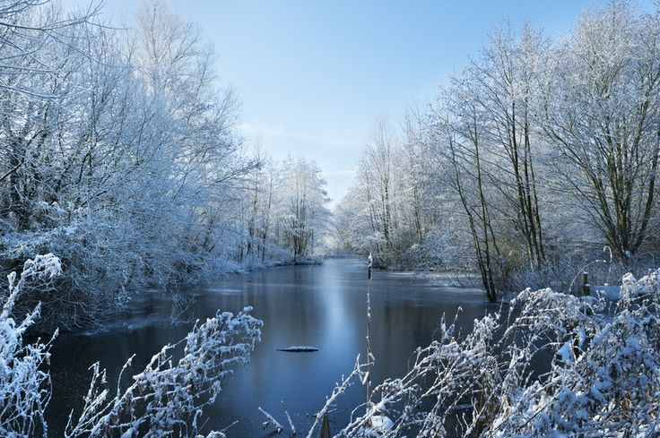 Winter Beauty park, trees, sky, landscape, duck, lake, frozen, birds, winter, water, cold, nature, river, blue, sun, clouds, tree, christmas, branch, natural, season, white, snow, garden, skyline, countryside, woods, ice, valley, ducks, frost, land, country, december, stream, rural, january, wonderland, freeze, xmas, february, snowflakes, scenery, wilderness, remote, snowy, frosty, freezing, icy, flake, flakes, wintery, frozen lake, frozen trees, frozen river, winter time, frozen water…
