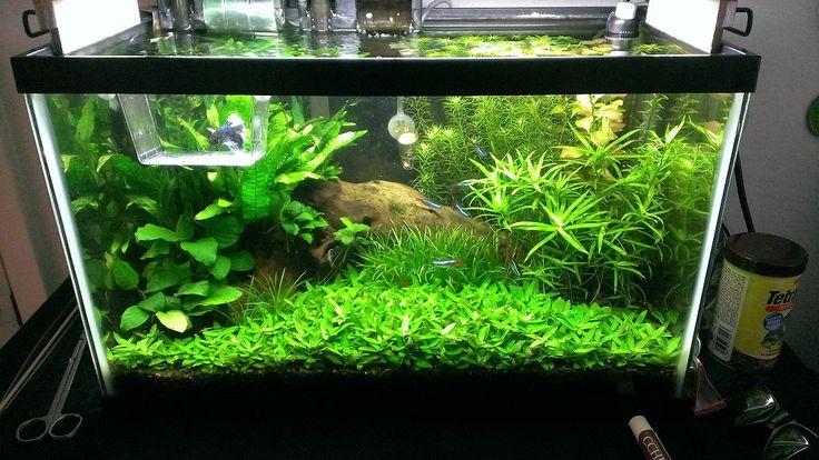 20 gallon fish tank decoration ideas 2017 - Fish Tank ...