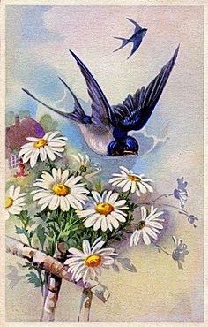 Swallows....rondini 6-8-13