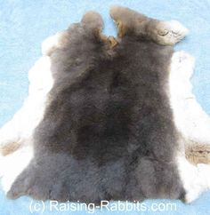 Tanning and curing rabbit hides