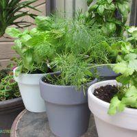 herb gardens potted herbs herbs garden garden gifts diy gardening ...