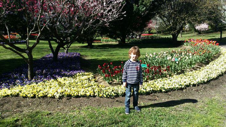 tuip top gardens sep 2016